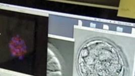 qeliza embrionale