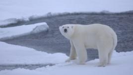 ariu polar
