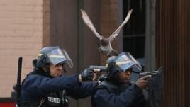 policia + pellumbi