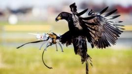 shqiponja dronet