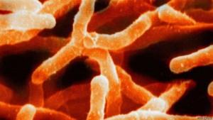 bakteriet
