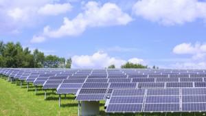 panelle diellore