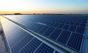 panelet diellore