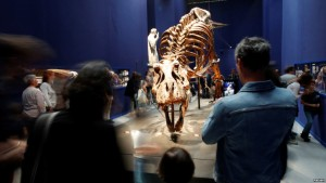 Tiranosaurit